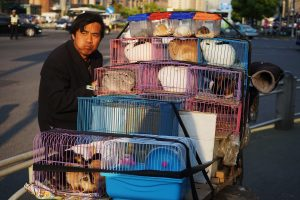 tested on animals in cages, china
