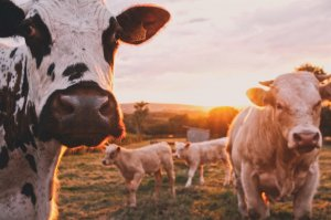 How Can I Ditch Dairy For Good?