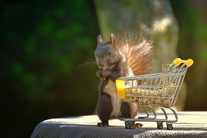 Going Vegan Through Coronavirus squirrel shopping